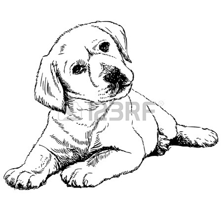 Lab Dog Drawing
