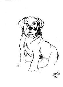 218x300 Lab Dog Drawings