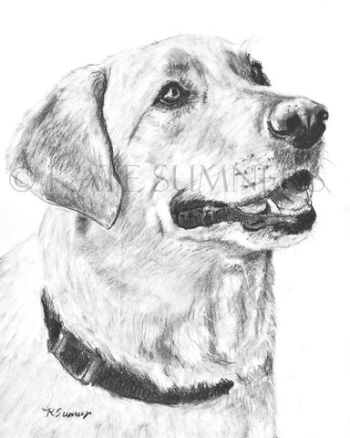 384x480 Labrador Retriever Art Print Of Drawing 8x10 Lab Dog Art Pet Art