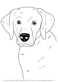 236x333 Learn How To Draw A Labrador Face (Farm Animals) Step By Step