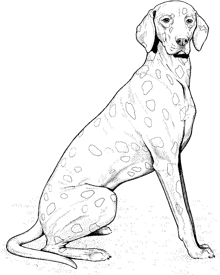 719x900 Real Puppy Drawings