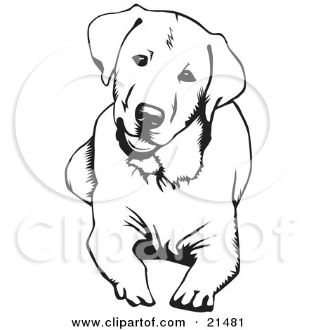 450x470 Clipart Illustration Of A Cute And Curious Labrador Retriever Dog