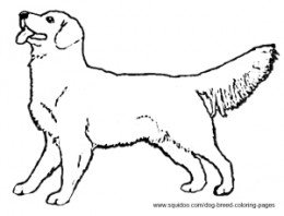260x198 Coloring Pages Draw A Golden Retriever Black Lab Coloring Pages