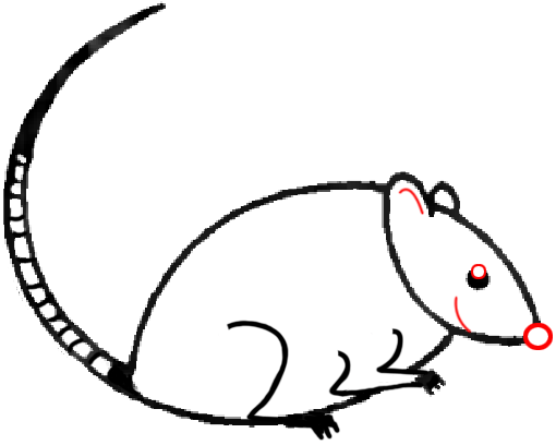 Lab Mouse Drawing