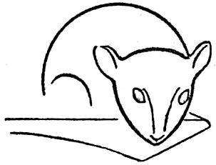 303x231 How To Draw A Mouse With Step By Step Mice Drawing Tutorial