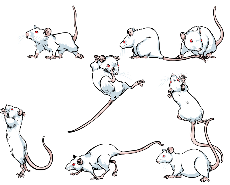 800x645 Pin By Nadine 2 On Mice Amp Rats