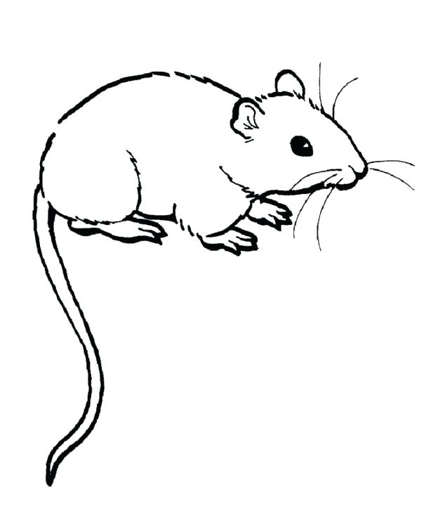 624x740 Elegant Lab Rats Coloring Pages For Gerbil Coloring Pages Rat