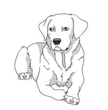 Lab Puppy Drawing