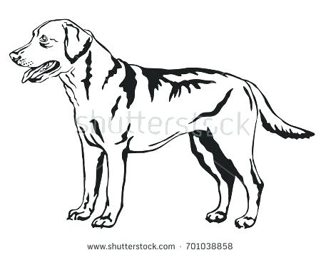 450x358 Labrador Retriever Coloring Pages Retriever Coloring Page Dog