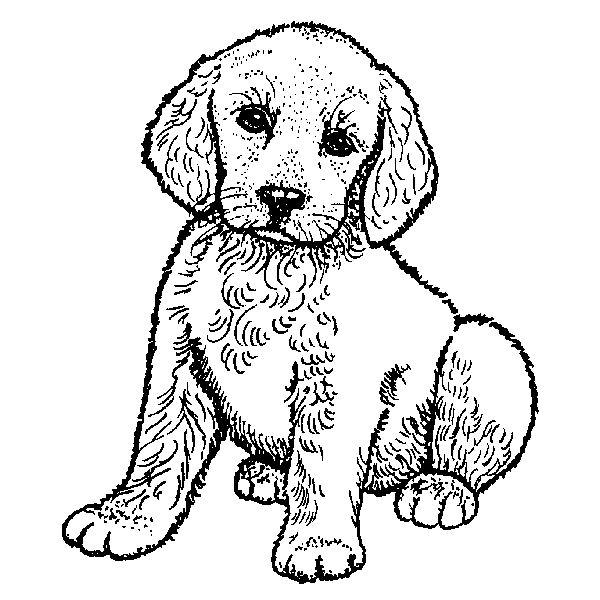 600x600 Purple Daisy Design G 2156 Lab Puppy