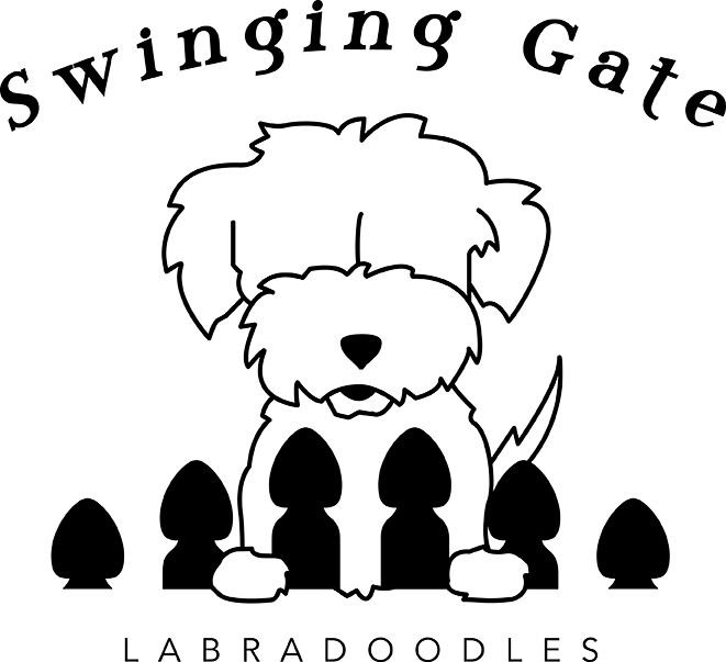 661x603 Available Pups Swinging Gate Labradoodles