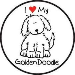250x250 Desert Mountain Doodles Goldendoodle Breeder In Southern California
