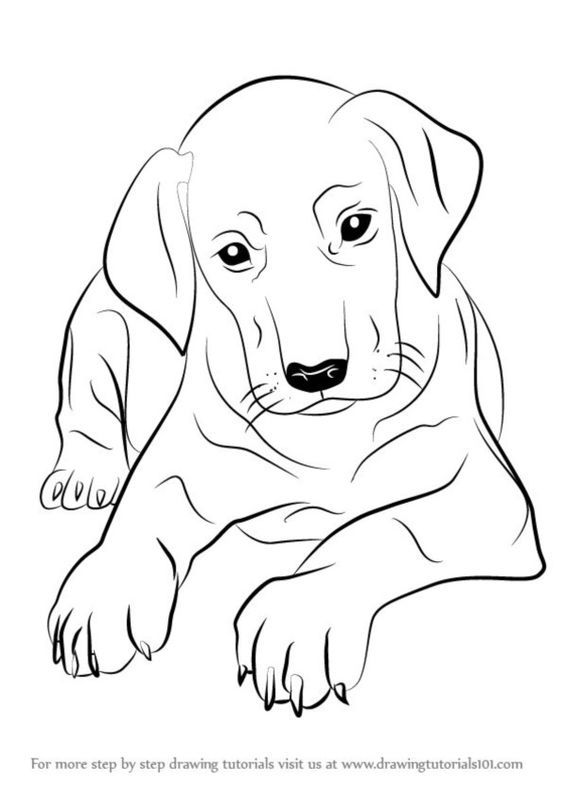 Labrador Cartoon Drawing