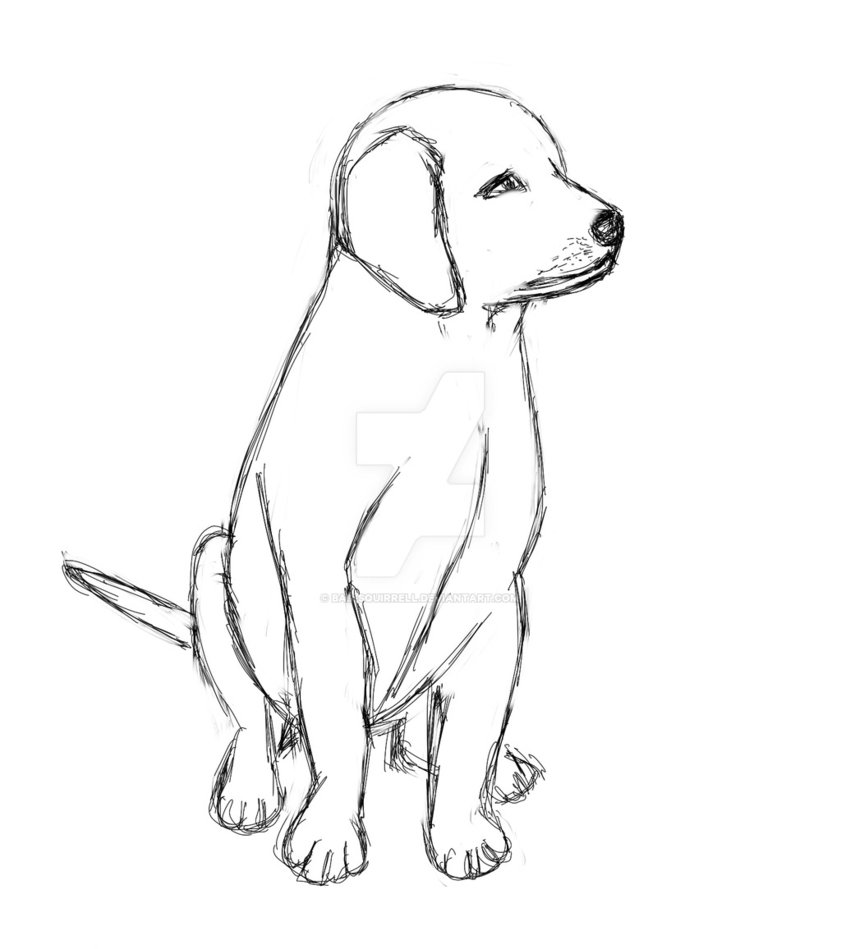 Labrador Dog Drawing