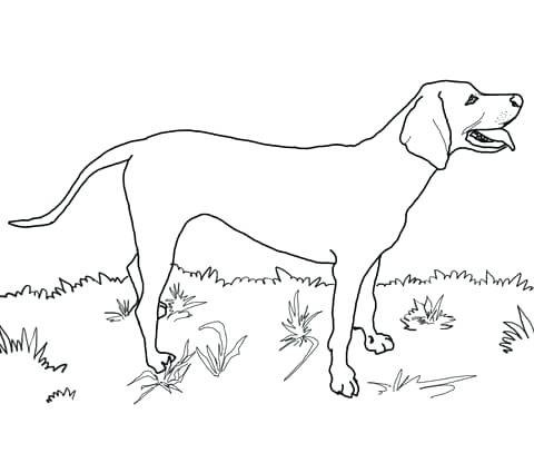 480x407 Labrador Retriever Coloring Pages Vector Image Of An Dog Labrador