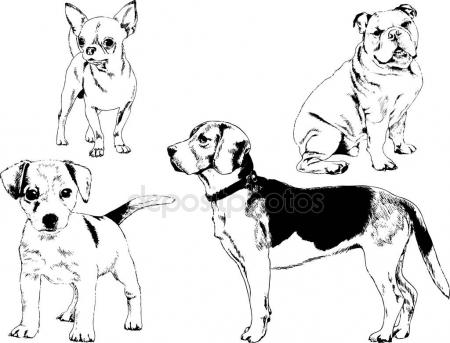 450x343 Labrador Isolated Stock Vectors, Royalty Free Labrador Isolated