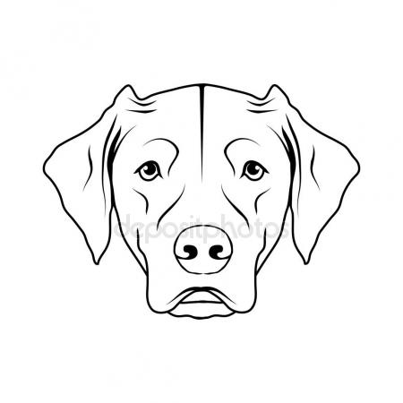 450x450 Labrador Isolated Stock Vectors, Royalty Free Labrador Isolated