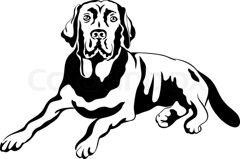 800x533 Black And White Sketch A Portrait Of A Close Up Of Serious Dog