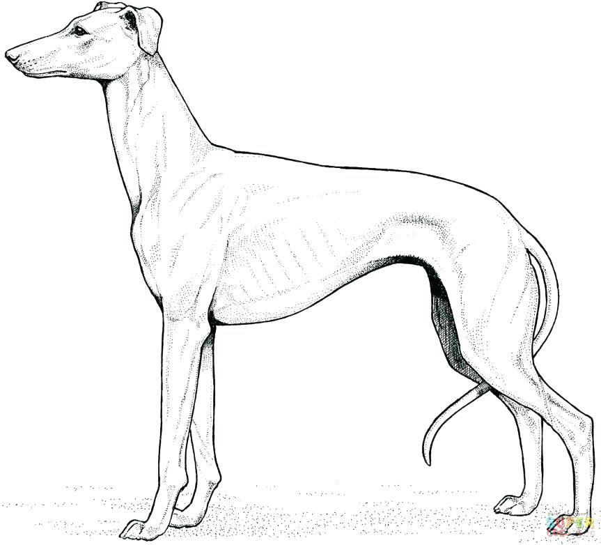 863x782 Labrador Retriever Coloring Pages Retriever Coloring Page Labrador