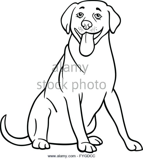 487x540 Labrador Retriever Coloring Pages Retriever Dog Cartoon