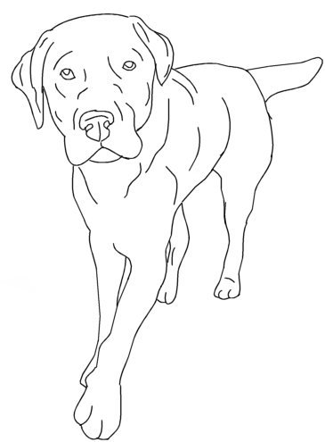365x495 Labrador Retriever By Aussienut