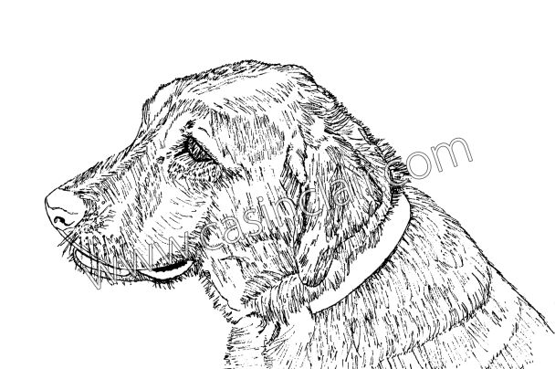 608x404 Sally, The Labrador Retriever Dog Portraits, Dog Paintings, Dog