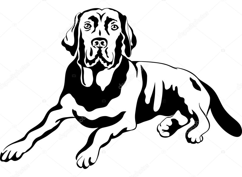 1023x750 Vector Sketch Dog Breed Labrador Retrievers Stock Vector