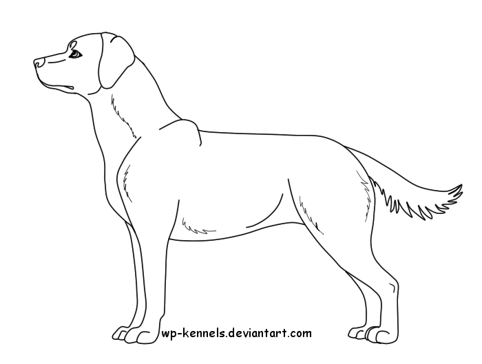 700x529 Free Labrador Retriever Lineart Female By Chaolithe