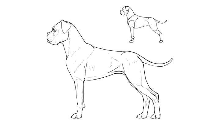 700x409 How To Draw A Dog Details Make The Difference