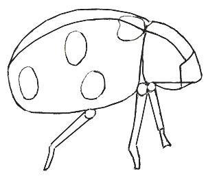 300x257 How To Draw A Ladybug