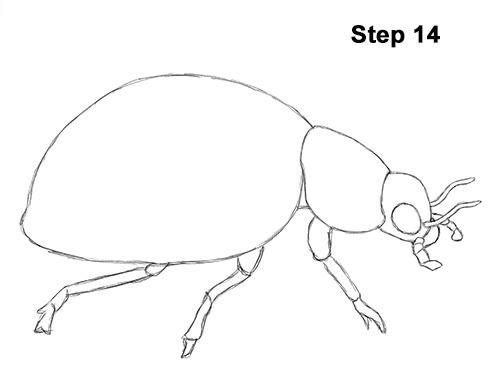 500x386 How To Draw A Ladybug