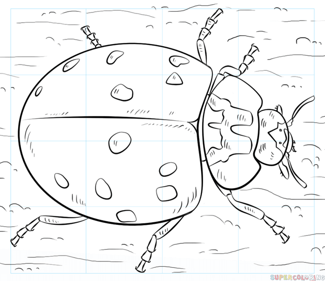 666x575 How To Draw A Ladybug Step By Step Drawing Tutorials