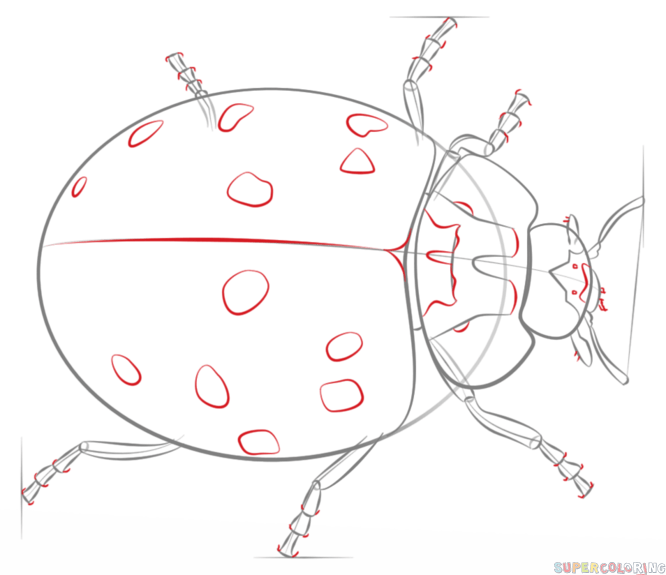 666x575 How To Draw A Ladybug Step By Step. Drawing Tutorials For Kids