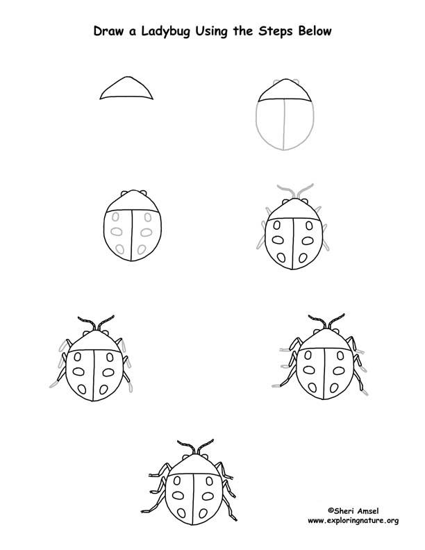 612x792 Ladybug Drawing Page