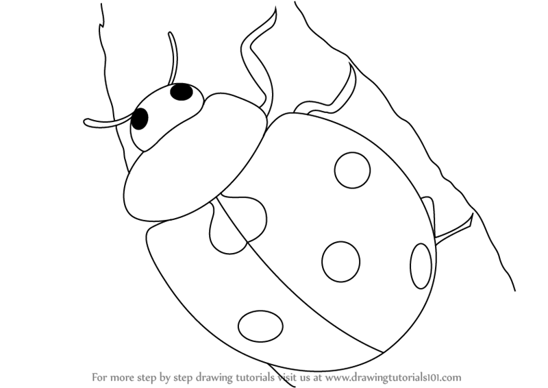 800x566 Learn How To Draw A Ladybug (Insects) Step By Step Drawing Tutorials