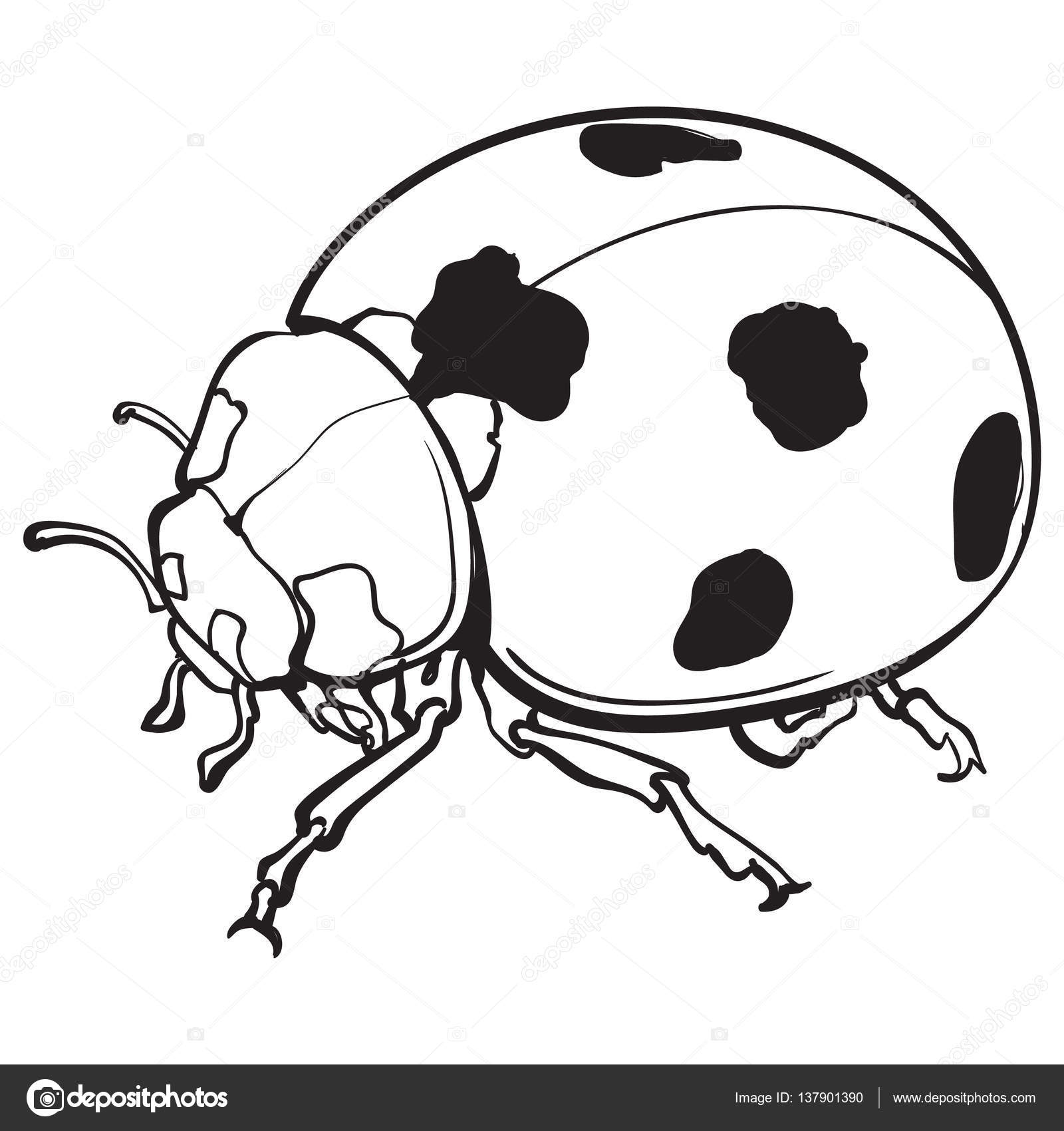 1600x1700 Red Ladybug, Ladybird With Black Spots, Isolated Sketch Style