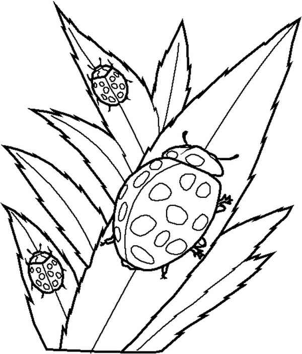 600x703 Drawing Of Lady Bug Coloring Page Color Luna