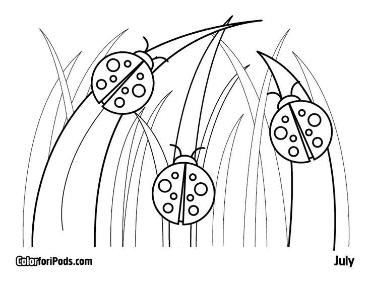 736x568 64 Best Ladybug Love Images On Ladybugs, Lady Bug