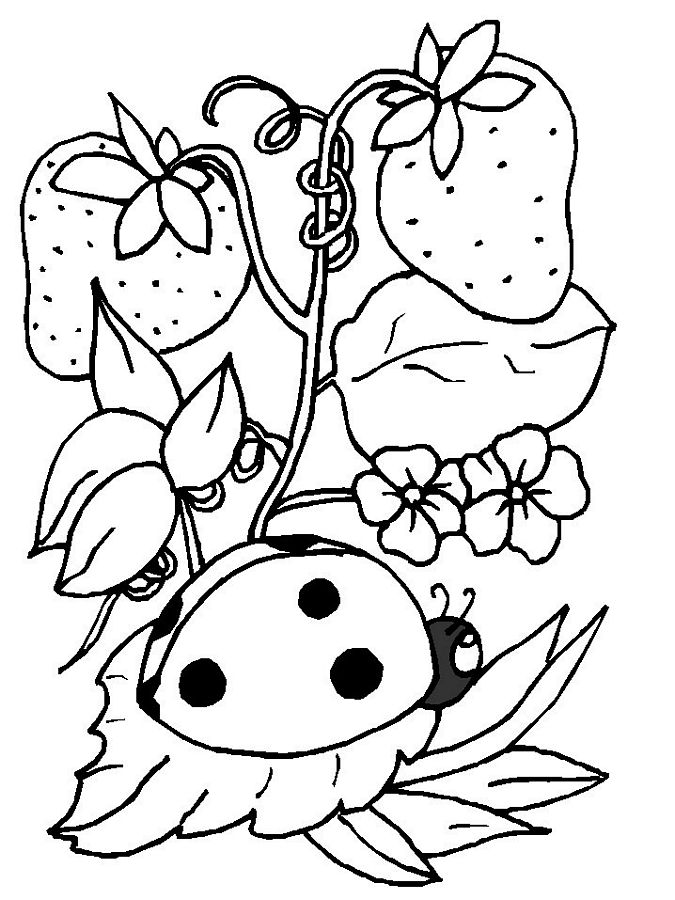 675x900 Lady Bug Coloring Page Printable Pictures Ladybug Coloring Pages