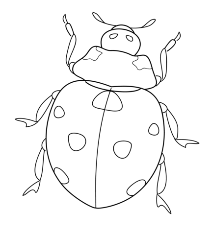 432x480 Ladybug Coloring Page Free Printable Coloring Pages
