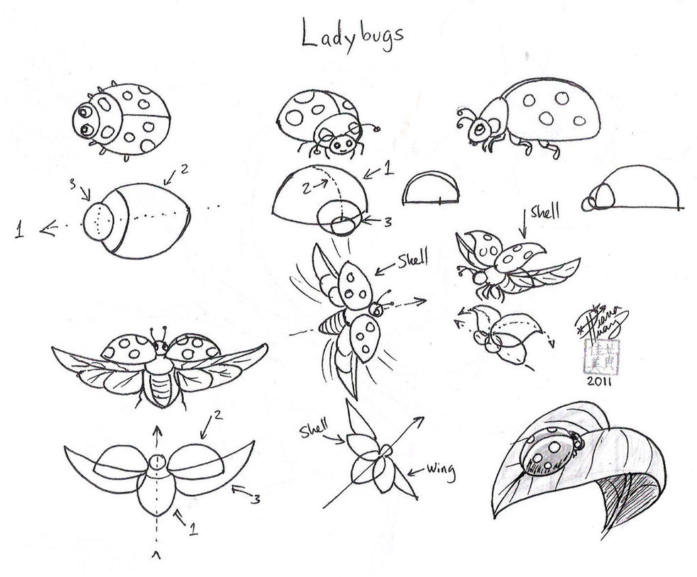 982x814 Draw Ladybugs By Diana Huang