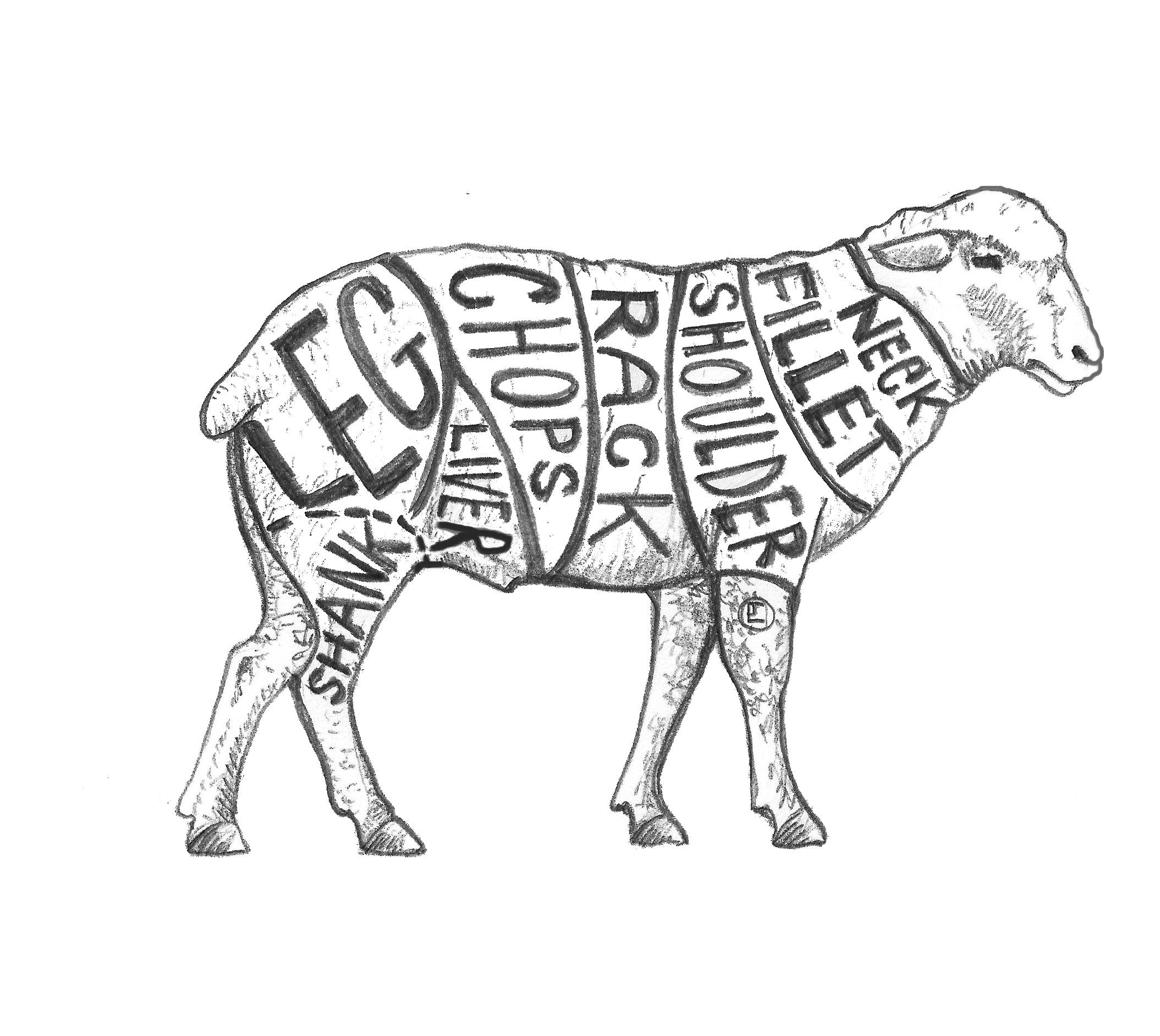 Lamb Drawing at GetDrawings.com | Free for personal use Lamb Drawing ...