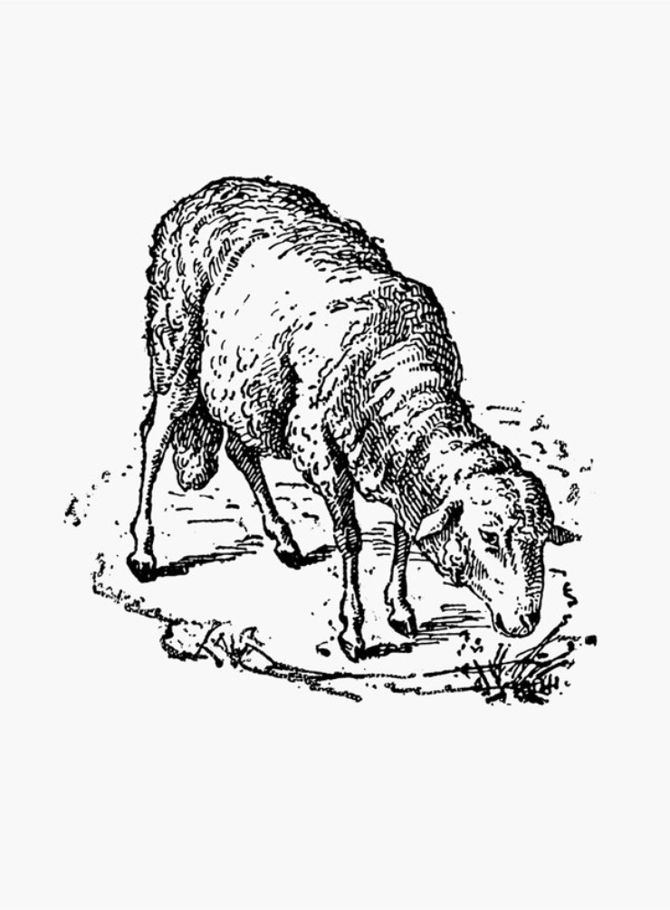 740x1005 A Guide To Meat Lamb