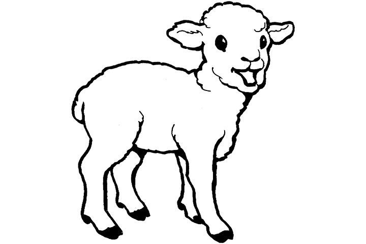 Lamb Line Drawing