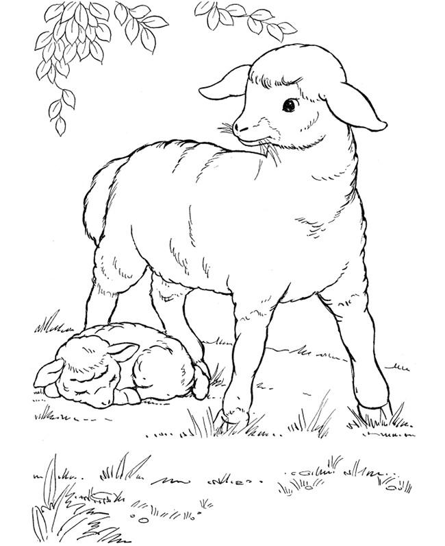 650x796 Farm Animal Template