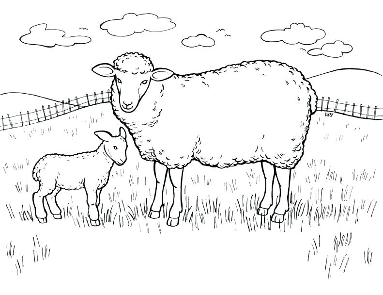 Lamb Outline Drawing at GetDrawingscom Free for personal use Lamb