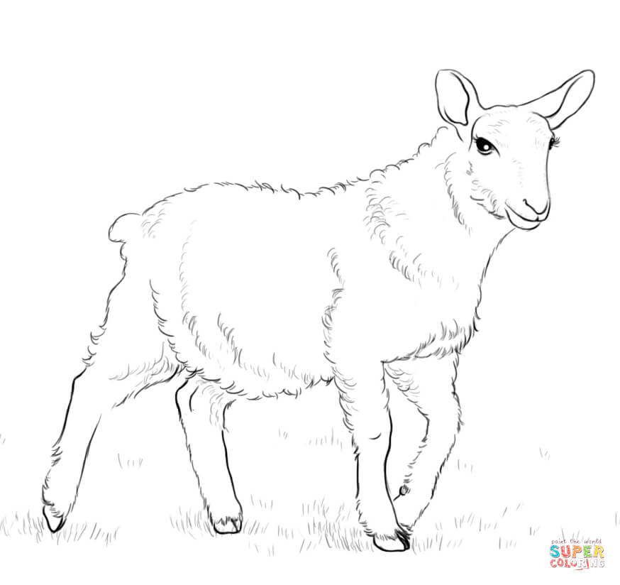 Lamb Outline Drawing at GetDrawings com | Free for personal