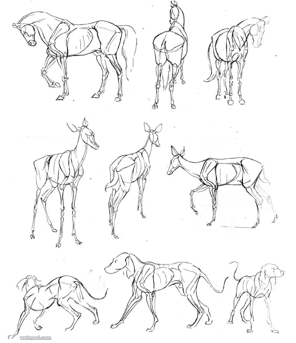 Land Animals Drawing