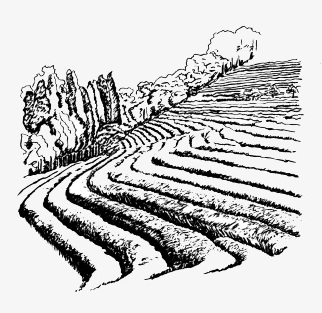 650x632 Black Pen Sketches The Farmland Terrace Illustrations, Black, Pen