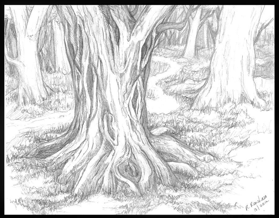 900x704 Forest Path Drawing By Ruth Renshaw